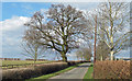 TL9603 : Hedgerow trees on Southminster Road by Roger Jones