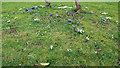 TL3501 : Snowdrops and Iris reticulata by Christine Matthews