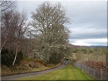 NH6751 : Road to Arrie and Taindore by Alan Reid