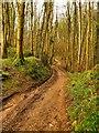 NX4336 : Path through Physgill Glen by Andy Farrington