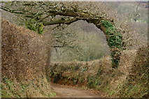 SZ5785 : Wind-blown Tree, Alverstone, Isle of Wight by Peter Trimming