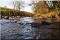 ST0216 : Mid Devon : Small Stream by Lewis Clarke