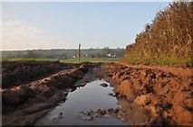 ST0215 : Mid Devon : Muddy Farm Track by Lewis Clarke
