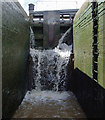 SJ6558 : In Minshull Lock near Church Minshull, Cheshire by Roger  Kidd