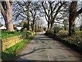 SJ4555 : Aldersey Lane, Coddington by Jeff Buck
