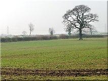 SE7160 : Winter tree in a field by Christine Johnstone