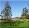 SU0611 : Mistletoe on the trees, Edmondsham by Maigheach-gheal