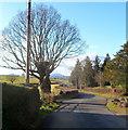 SO4502 : Tree and hedge-line road, Llanfihangel Tor-y-Mynydd by Jaggery