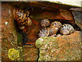 SU0563 : Horton - Snails by Chris Talbot