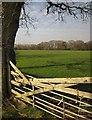 SX3288 : Field near Ladycross by Derek Harper