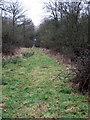 SP8033 : Ride through Thickbare Wood by Philip Jeffrey