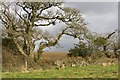 SW6032 : Footbridge by tree by Elizabeth Scott