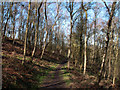 SK2263 : Footpath through Harthill Moor Wood by Trevor Littlewood