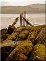 NX4749 : Rock Salmon by Andy Farrington