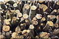 TQ6934 : Log Pile near Kilndown by Julian P Guffogg