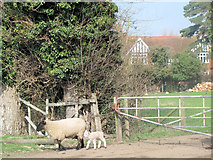 SP9013 : Waiting by the Gateway at Wilstone Great Farm by Chris Reynolds