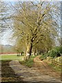 SP5259 : Driveway to Catesby House by Ian Rob