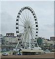 TQ3103 : The Brighton Wheel by JThomas