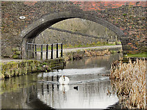 SD7908 : Manchester, Bury and Bolton Canal, Rothwell Bridge by David Dixon