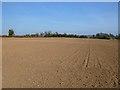 SU4739 : Farmland, Wonston by Andrew Smith