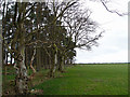 NS4820 : Fields and Trees at Torview by wfmillar