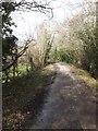 SX0671 : Camel Trail west of Hellandbridge by David Smith