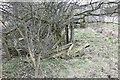 SU5174 : Sleepers and fence posts by Bill Nicholls