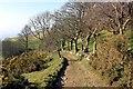 SJ1269 : Offa's Dyke Path near Aifft by Jeff Buck