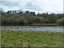 TQ0153 : Flooded field, Sutton Place by Robin Webster