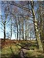 SE8790 : Woodland at Bridestones by DS Pugh