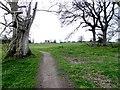 H3623 : Trackway, Crom Estate by Kenneth  Allen