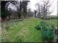 H3624 : Trackway, Crom Estate by Kenneth  Allen