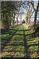 SO6943 : Green lane at Bosbury by Philip Halling