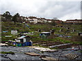 ST6075 : Muller Road Allotments by Anthony Vosper