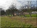 SJ8383 : The Upper Garden, Quarry Bank Mill by David Dixon