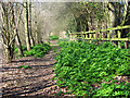 TG3821 : Path to All Saints church, Catfield by Evelyn Simak