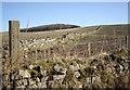 NJ6508 : Dry stone wall field boundary by Stanley Howe