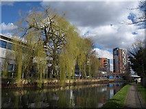 TQ1883 : Willow by the canal, Alperton by Derek Harper