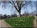 SU7173 : Spring flowers on Forbury Hill by Paul Gillett