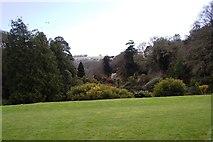 SW7627 : Trebah Gardens by SMJ
