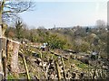 SJ9494 : Woodend Allotments by Gerald England