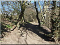 SE1426 : Track through Judy Woods - Station Road by Betty Longbottom