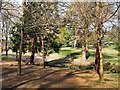 TQ8010 : Trees in Alexandra Park by Paul Gillett