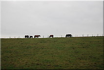 TR1955 : Horses grazing by Old Palace Rd by N Chadwick