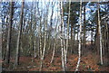 SU8451 : Managed Access Woodland by N Chadwick