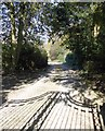 SE2040 : Driveway to Low Hall - Gill Lane by Betty Longbottom