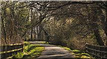 J4774 : Spring path, Kiltonga, Newtownards (3) by Albert Bridge