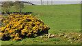 J4476 : Whins near Craigantlet, Belfast by Albert Bridge