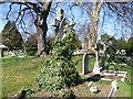 TQ1373 : Angel amongst the ivy, Twickenham Cemetery by Marathon