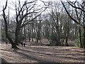 TQ2586 : Oak wood, West Heath by Stephen Craven